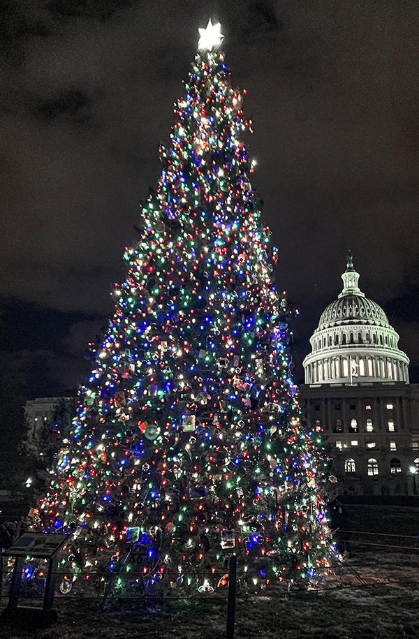 Capitol Xmas Tree